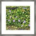 Lettuce Lake Flowers Framed Print