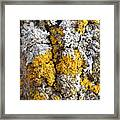 Lichens On Tree Bark Framed Print
