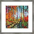 Light In The Woods Framed Print