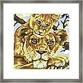 Lioness And Son Framed Print