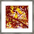 Looking Through Tree Leaves 2 Framed Print