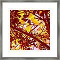 Looking Through Tree Leaves 2 Framed Print