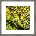 Looking Up To A Beautiful Sunglowing Fern In A Tropical Forest Framed Print