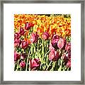 Lots Of Tulips Framed Print