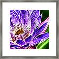 Lotus Close-up Framed Print