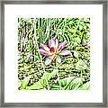 Lotus Flower Bloom In Pink 2 Framed Print