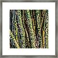 Love And Bamboo Framed Print