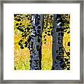 Love Trees Framed Print