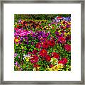 Lovely Dahlia Garden Framed Print