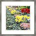 Lovely Flowers In Manito Park Conservatory Framed Print
