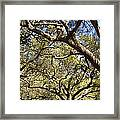 Low Angle View Of Trees In A Park Framed Print