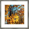 Luminous Leaves Framed Print