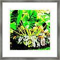 Lush Garden Framed Print