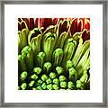 Macro Flower Framed Print