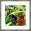 Macro Nature Framed Print