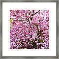 Magnolia Beauty #14 Framed Print