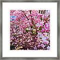 Magnolia Beauty #15 Framed Print