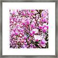 Magnolia Tree Beauty #1 Framed Print