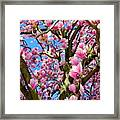 Magnolia Tree Beauty #3 Framed Print