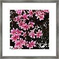 Magnolias In Spring Framed Print