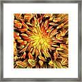 Mandala Flower  Framed Print