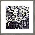 Manhattan Spring Framed Print