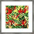 Many Peppers Framed Print