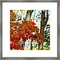 Maple Leaves And Birch Bark Framed Print