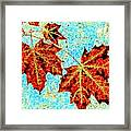 Maple Mania 13 Framed Print