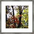 Maple Mania 16 Framed Print