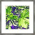 Maple Mania 19 Framed Print