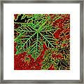 Maple Mania 7 Framed Print