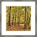 Maple Woods Trail Framed Print