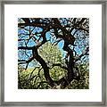 Mesquite Window Framed Print