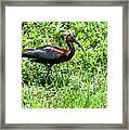 Metallic Colors Framed Print