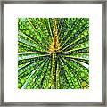 Mexican Fan Palm Leaf Framed Print