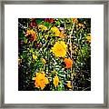 Mixture Of Flowers On Summer Day Framed Print