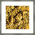 Modelling A Triceratops Fossilised Recovery Framed Print