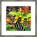 Monarch Butterfly And Zebra Butterfly Framed Print