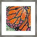 Monarch Butterfly On Ocotillo Blossom Framed Print