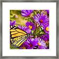 Monarch On Mt. Washington Framed Print