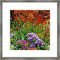 Yellow-orange Kangaroo Paws And Sea Lavender By Napier At Pilgrim Place In Claremont-california Framed Print
