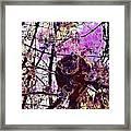 Monkey Tree Zoo Animals Nature  Framed Print