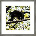 Monkey2 Framed Print