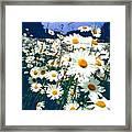 Moon Daisies Framed Print