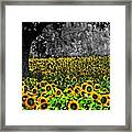 Morning Doves And The Sunflower Field Framed Print