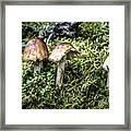 Mushrooms Trio Framed Print
