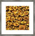 Mushrooms In Spain Framed Print