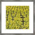 Mustard Color In The Vineyard  Napa Ca. Framed Print
