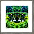 Mysterious Woods Framed Print